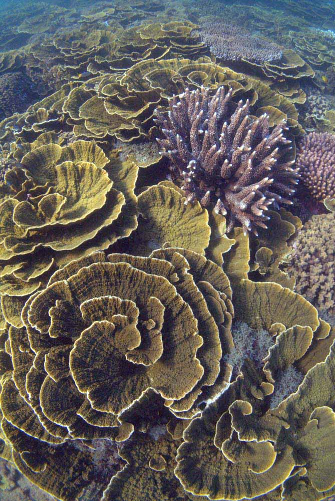 Inspiration from bracket/plate coral. Coral at Arthur Bay, Magnetic Island. Image by Holobionics (own work) licenced under a Creative Commons licence [CC BY-SA 4.0] (http://creativecommons.org/licenses/by-sa/4.0), via Wikimedia Commons. https://commons.wikimedia.org/wiki/File%3AMontipora_coral%2C_Arthur_Bay%2C_Magnetic_Island%2C_January_2016.jpg