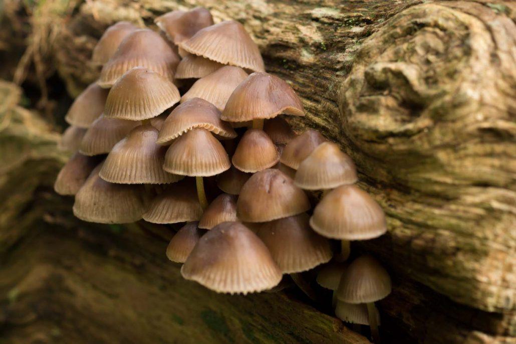 fungi-inspire-pexels-3
