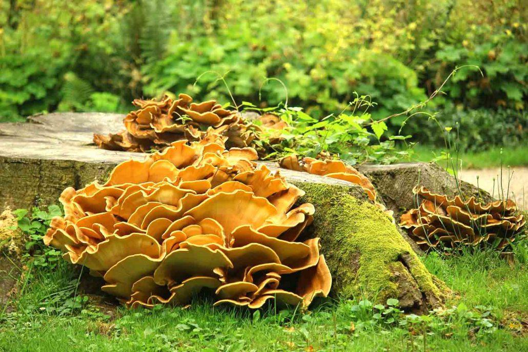 Tree fungi inspiration, image from Pixabay.
