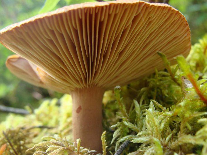 fungi inspiration, image from Pixabay.