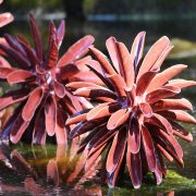 Award winning ceramic water sculpture - Symmetry by Michelle Maher. Shown here at Sculpture in Context 2012 in The National Botanic Gardens in Dublin. Inspired by Dahlia and Coral forms, it was sculpted in my own grogged paper clay body and high fired in an electric kiln. www.ceramicforms.com