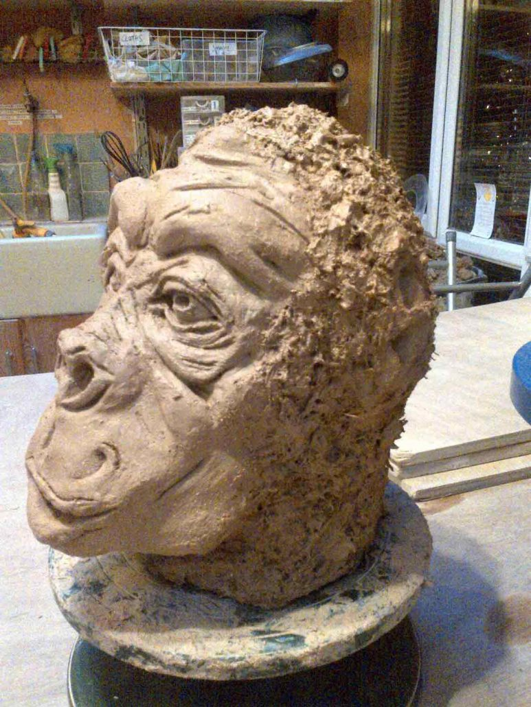 Gorilla modelled by Joanne Regan at Dublin based Wednesday evening ceramic class. The 'fur' was created using moss coated in clay slip, the moss burns away in the kiln leaving its texture in the slip. Later electric fired to 1260°C (Cone 8).