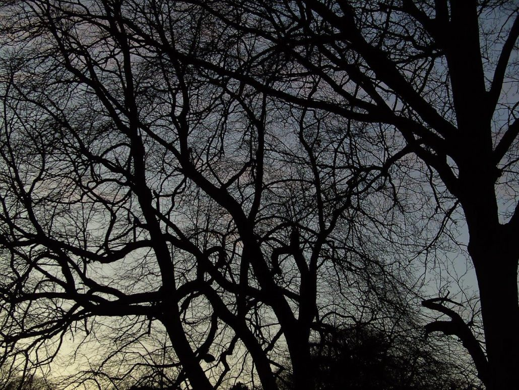 Tree detail, the Phoenix Park, Dublin. Winter night sky. www.ceramicforms.com