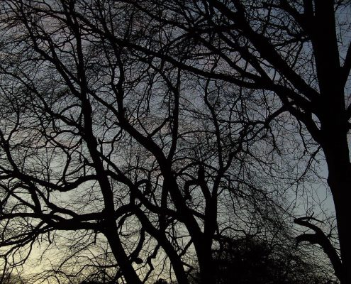 Tree detail, the Phoenix Park, Dublin. Winter night sky. www.ceramicforms.com