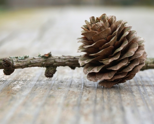 inspiration-pinecone-1308326_pixabay