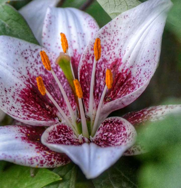 pollen-inspire-pexels