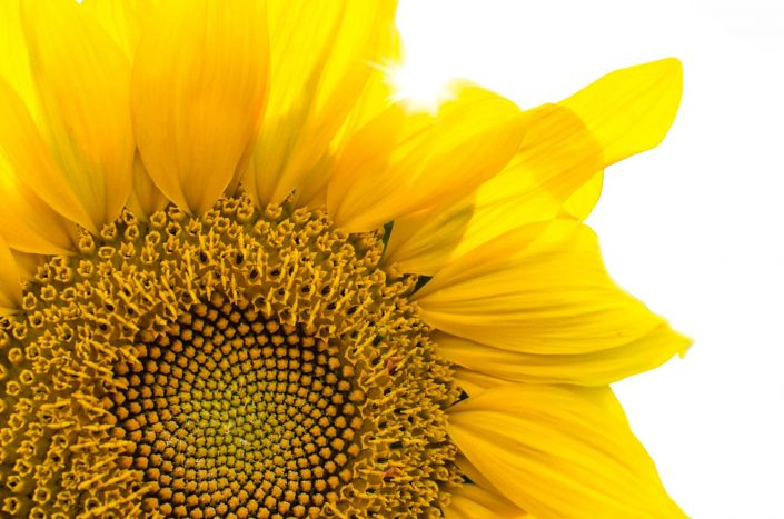 sunflower-head-inspire-pexels.jpg